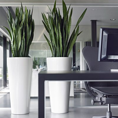 Planters For Life Grunidee Raum Begrunung Hydrokultur Pflanzen