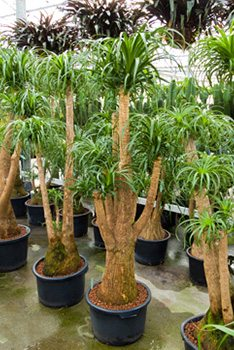 Die 25 Beliebtesten Hydrokulturpflanzen Für Gesunde Bürobegrünung