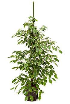 Grünidee Hydrokulturpflanzen